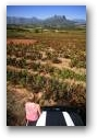4x4 Driving at Dellrust Wine Estate  » Click to zoom ->